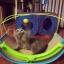 เปลญวน ที่นอนเล่นแมว SPORTPET thumbnail 12