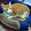 ที่นอนแมว บ้านแมว 2 in 1 catlitter thumbnail 3