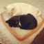 ที่นอนขนมปัง Sandwich Mat For Cat - Dog thumbnail 2