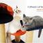 MU0161 คอนโดแมว ต้นไม้แมว มีที่นอน กระบะนอน thumbnail 4