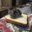 ที่นอนขนมปัง Sandwich Mat For Cat - Dog thumbnail 3