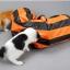MU0010 อุโมงค์ที่นอนแมว ของเล่นแมวน้อย Oxford retractable cat runnel thumbnail 16