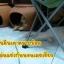 บ้านดินเผาสัตว์เลี้ยงช่วยคลายร้อน บ้านแมว กระต่าย สุนัข หนู ช่วยป้องกันภาวะโรคลมแดดหรือฮีทสโตรกเสียชีวิตได้ค่ะ thumbnail 3