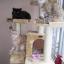 MU0068 คอนโดแมวหกชั้น ขนาดใหญ่ ต้นไม้แมว มีบ้านอุโมงค์สองชั้น ของเล่นแขวน บันได สูง 180 cm thumbnail 8
