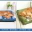 ที่นอนสุนัขมีพร้อมหมอนข้างสำเร็จรูป มี 2 ขนาด thumbnail 3