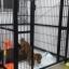 กรงรั้วสำหรับสุนัขและกระต่ายเลี้ยงในร่ม มีหลายสี หลายไซส์ thumbnail 15