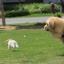 สายจูง สายจูงรัดอกสำหรับสุนัขขนาดใหญ่ สะท้อนแสง thumbnail 7