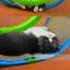 เปลญวน ที่นอนเล่นแมว SPORTPET thumbnail 3