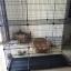 กรงแมวขนาดใหญ่ 3 ชั้น มีบันได 2 ข้าง 140X48X152 cm thumbnail 4
