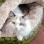 ที่นอนแมว Hamburger Cat Bed thumbnail 3