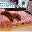 ที่นอนมีหมอนสำหรับสุนัขพันธุ์ใหญ่ มีหลายสี สามารถถอดซักได้ thumbnail 1