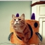 กล่องที่นอนแมวและที่ลับเล็บแมว รูปทรงน่ารัก thumbnail 4