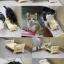 MU0030 โต๊ะรับประทานอาหารแมว DOGGYMAN ป้องกันฝุ่น แมลง ความสกปรก ปรับระดับความสูงได้ นำเข้าจากญี่ปุ่น thumbnail 4