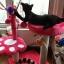 MU0064 คอนโดแมวสองชั้น ต้นไม้แมว รูปเท้าสัตว์ กระบะนอน ของเล่นลูกตุ้มแขวน สูง 82 cm thumbnail 2
