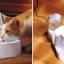 น้ำพุหมาน้ำพุแมว Drinkwell Original Pet Fountain with Bonus 50-Ounce Reservoir ของพร้อมส่ง thumbnail 2