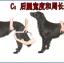 รถเข็นสำหรับสัตว์พิการ วีลแชร์หมา วีลแชร์แมว วีลแชร์สำหรับสัตว์เลี้ยงอายุมาก ขนาดเล็ก สำหรับขาหลัง รุ่น CF-01 thumbnail 8