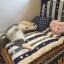 เตียงนอนสัตว์เลี้ยงฟองน้ำ ผ้าฝ้าย มีทั้งขนาดเล็กจนถึงใหญ่ น้องโกลเด้นท์นอนได้สบายค่ะ thumbnail 2