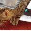 ประตูหมาแมว ประตูเล็กสำหรับให้หมาแมวเข้าออกได้เอง thumbnail 2