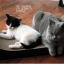 MU0003 โซฟาแมว ROMA TADA ที่ลับเล็บแมว ที่ฝนเล็บแมว ป้องกันแมวน้อยซนข่วนเฟอร์นิเจอร์ในบ้าน thumbnail 17