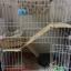 กรงแมว style Condo มีหลายชั้น บ้านแมว กรงสัตว์เลี้ยง เป็นทั้งบ้านที่นอน ห้องอาหาร ห้องน้ำสำหรับสัตว์เลี้ยง ประกอบง่าย สูง51cm - 158 cm พับเก็บได้ มีล้อ thumbnail 13