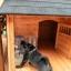 บ้านส่วนตัวสุนัขสำเร็จรูป Dog House King Golden Kennel thumbnail 6