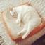 ที่นอนขนมปัง Sandwich Mat For Cat - Dog thumbnail 1