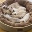 ที่นอนหมาแมวทรงกลมขนาดใหญ่ สีน้ำตาลอ่อน สีน้ำตาลเข้ม thumbnail 4