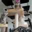 MU0061 คอนโดแมวเจ็ดชั้น ขนาดใหญ่ ต้นไม้แมว มีบ้านอุโมงค์สองชั้น ของเล่นแขวน สูง 180 cm thumbnail 19