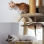 MU0007 คอนโดแมวหกชั้น ต้นไม้แมว ขนาดใหญ่ cat tree มีกล่องและอุโมงค์เล่นซ่อนหาและงีบพักผ่อน สูง 240-275 cm thumbnail 6