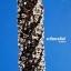ตะกรุดคู่ชีวิต หลวงปู่พวง วัดพระบาทน้ำพุ จ.เพชรบูรณ์ ดอกเล็ก (ยาว 1.5 นิ้ว) thumbnail 3