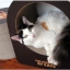 ของเล่นแมว ที่ลับเล็บแมวลูกฟูก รูปทรงกลม thumbnail 4