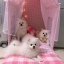 ชุดที่นอนสัตว์เลี้ยงพันธุ์เล็กและกลาง มีม่านบังเป็นส่วนตัว thumbnail 10