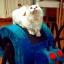 กล่องที่นอนแมวและที่ลับเล็บแมว รูปทรงน่ารัก thumbnail 1