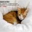 MU0020 ที่นอนแมวหนานุ่ม อบอุ่นเหมือนอยู่ในอ้อมอกแม่แมว Pocket wrapped cat litter thumbnail 7
