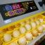 ตู้ฟักไข่ 96 ฟอง thumbnail 5
