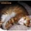 MU0019 ที่นอนแมวอบอุ่น หนานุ่ม รูปทรงเหมือนโพลงไม้ Chocolate Cat bed thumbnail 10