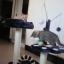 MU0064 คอนโดแมวสองชั้น ต้นไม้แมว รูปเท้าสัตว์ กระบะนอน ของเล่นลูกตุ้มแขวน สูง 82 cm thumbnail 3