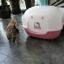 ห้องน้ำแมว Hello Kitty ห้องน้ำแมวสีหวานน่ารักสำหรับสาวกคิตตี้ thumbnail 15