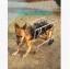 รถเข็นสำหรับสัตว์พิการ วีลแชร์หมา วีลแชร์แมว วีลแชร์สำหรับสัตว์เลี้ยงอายุมาก ขนาดใหญ่ 4 ล้อ รุ่น LLG-27 thumbnail 3