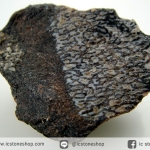 กระดูกไดโนเสาร์จากรัฐยูท่าห์ USA (Agatized Dinosaur Bone) (13.9g)