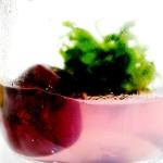 สวนหินในขวดแก้ว ไม่ต้องรดน้ำ (เรดเจสเปอร์+ ต้นกาบนำโชค)