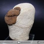 หินแม่น้ำธรรมชาติ รูปหัวนกโดโด้ ขนาดตั้งโต๊ะ(210g)