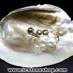 เปลือกหอยมุกพร้อมไข่มุก (126g)