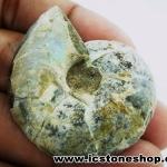 ฟอสซิล แอมโมไนต์ลายเฟิร์นและเหลือบรุ้ง(Ammonite) ผ่าครึ่ง (20.8g)