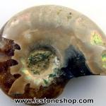 ฟอสซิล แอมโมไนต์เหลือบรุ้ง(Ammonite) (2.6g)