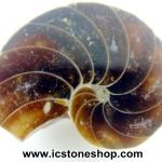 ฟอสซิล แอมโมไนต์(Ammonite) ผ่าครึ่ง(3g)