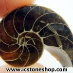 ฟอสซิล แอมโมไนต์ (Ammonite) ผ่าครึ่ง(6g)