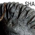 ศาลีคราม (SHALIGRAM) มณีแห่งพระวิษณุ
