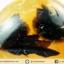 เดนไดทริก อาเกต Dendritic Agateขัดมันจากมาดากัสการ์ (47g) thumbnail 3