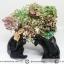 บิสมัท Bismuth รูปแบบแร่ที่มนุษย์ทำขึ้น(149g) thumbnail 2